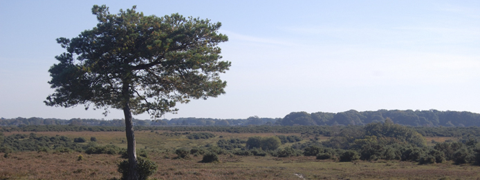 New Forest Costal Cottages